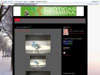 Caturra (Neca), Exposições/Eventos, As Minhas Aves, Link´s