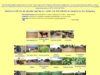 Biodiesel Fazendas a venda na bahia usinas de biodiesel plantação
