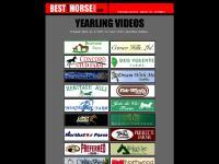 Best Damn Horse Videos