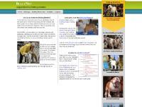bullynet.com Bulldog dogs,dog, Bulldog champion