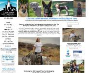 "Carolina Dog Training, LLC ""Leader of the Pack"""