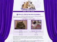 Persian kittens, Maine Coon kittens, Siamese kittens, Ragdoll kittens