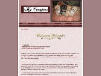 Cavapoo Puppies, Dams & Sires, Upcoming Litters, Shipping