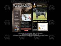Cane Corso, ChampionCorso.com, Italian Mastiff, Sicilian Branchiero, Stud Service,