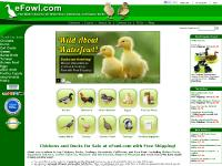 Chickens for Sale, Ducks, and Geese at eFowl.com - Backyard Egg Laying Chickens,