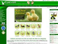 Chickens, Ducks, Geese, Game Birds