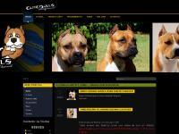 Elitebulls AmStaff Kennel - Criando com Excelência!