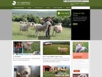 farmsanctuary.org Jobs, Adopt-A-Turkey, Farm Sanctuary feature
