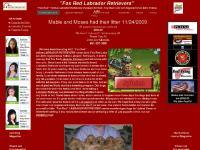 eStore, Labrador Retriever Male - Moses, Labrador Retriever Male - Champ, Lab Female - I EMMA Red Dog