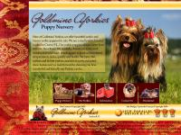 citrus county yorkie puppies, marion county yorkie puppies, lake county yorkie puppies, florida yorkie puppy sales