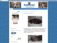 Lojinha, BAZAR ANIMAL BELLACATARINA, 00:19, 0 comentários