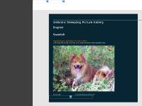 icelandic-sheepdog-picture-gallery.com icelandic sheepdog