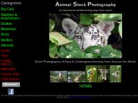 kostich.com Big Cats, Reptiles & Amphibians, Snakes