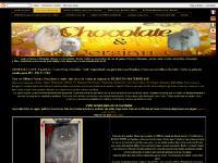lilacpersiancats.com
