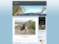 migration.wordpress.com Migrations, AboutMigrations, BannerArt