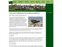 Pond Life, Pond Plants, Teesdale, Garden Suppliers