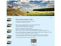 Oxfordshire Chickens - Orpingtons & Pekins