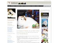 Purrinlot | Persian Kittens & Cat Supplies, Cat Grooming, Cat Shampoo, Cat Bath - Purrinlot