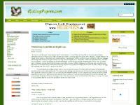 racingpigeon.com - Main