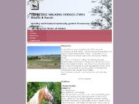 rockinb-twh-ranch.com gaited, horse, Tennessee walking horse