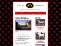 Arabian Horses, Pure Crabbets, Straight Egyptians, Horses For Sale, Breeders, Black, White, Stallions, Colts, Mares, Fillies, Australia