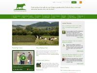 Dairy Farming, Dairy Cow Welfare and Dairy Facts | Thisisdairyfarming.com