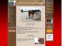 travhest.net Min forside, Bilder av Prinsen, Helsa til Prinsen