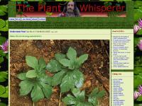 wildplanthealing.com wild plant healing, natural herbal remedies, medicinal plants