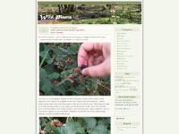 Bramble, thorns, Heather (callunavulgaris), Bell Heather